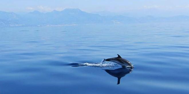 SOS Grand Bleu dauphin