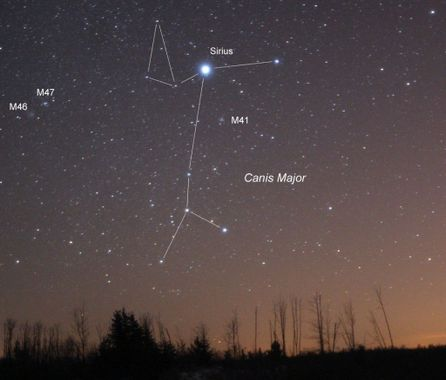 Canis major canicule