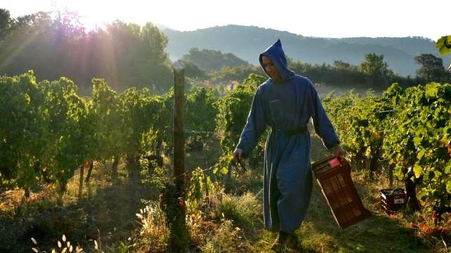 Abbaye Barroux - les vignes