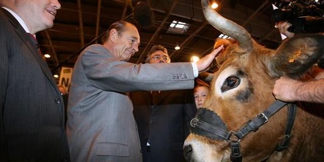 Chirac - concours agricole - vache