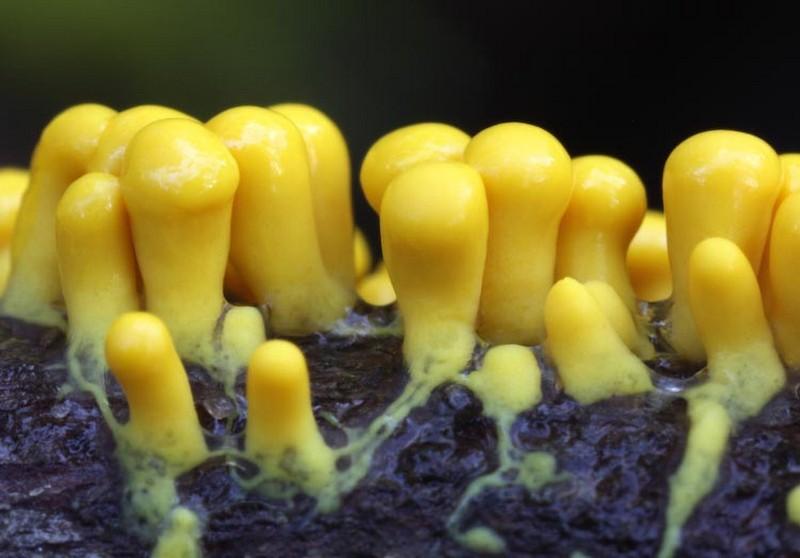Blob jaune