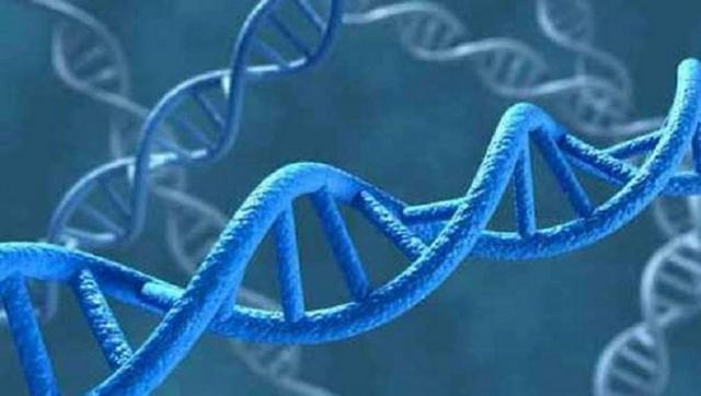 Génétique - ADN