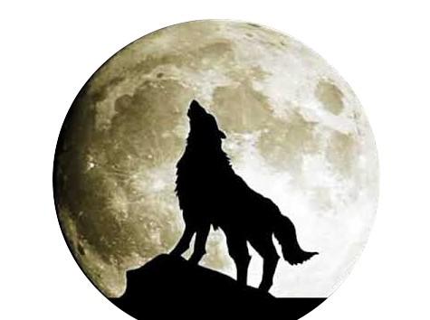 Loup - Pleine lune