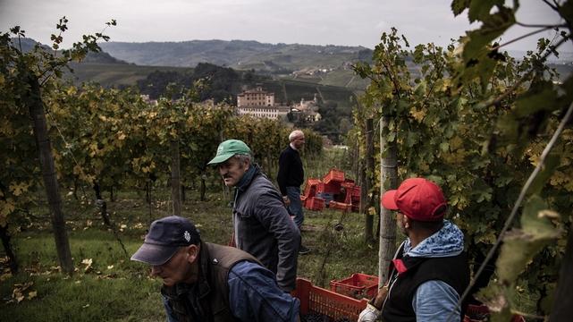 Vendanges Italie