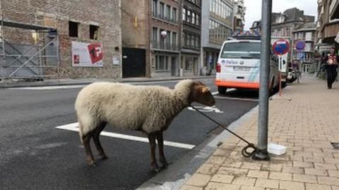 Mouton - parking