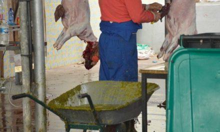 """<span class=""""caps"""">BB</span> en lutte contre la violence barbare faite aux moutons"""