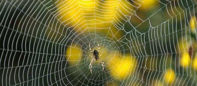 Web - Toile araignée